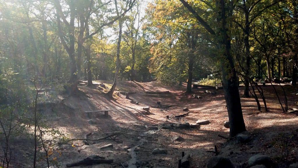 Foto van open plek in een bos