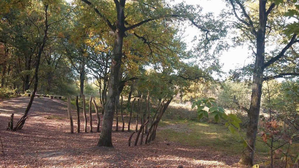 Foto van een halve cirkel van bomen