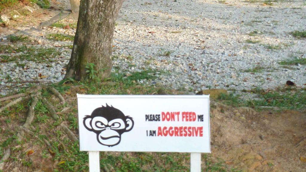Waarschuwing over agressieve apen